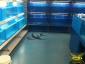 Aspart-X Floor Marine Dreams